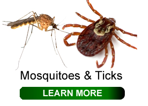 mosquitoes-and-ticks